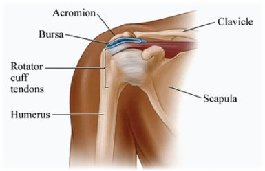 sub acromial impingement kingsley physio more than your local physio